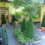 Hotel Karin - Garden